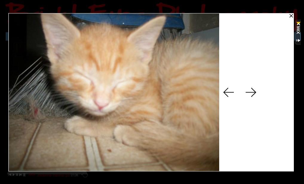 blur cat