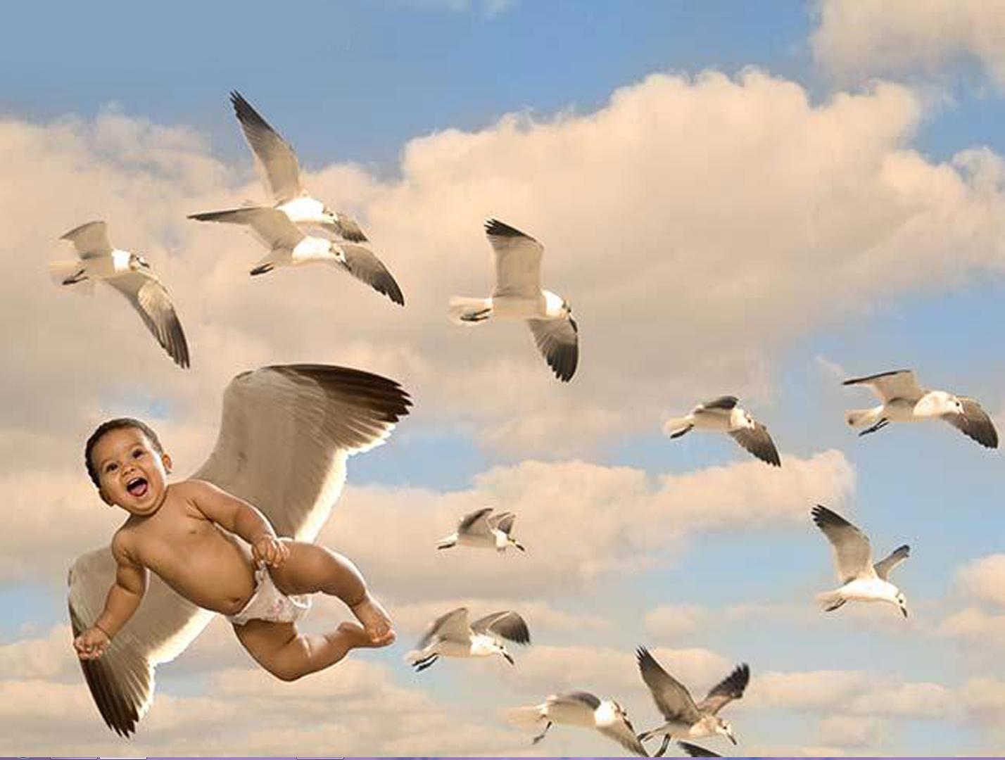 seagul baby